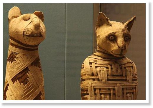 Αιγυπτιακές εφαρμογές γνωριμιών