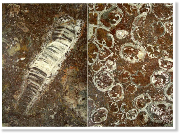 τεχνικές γνωριμιών για απολιθώματα