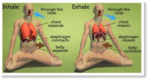 Diaphragm-Breathing