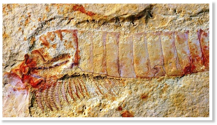 τύπους γνωριμιών που χρησιμοποιούνται μέχρι σήμερα τα απολιθώματα περιλαμβάνουν
