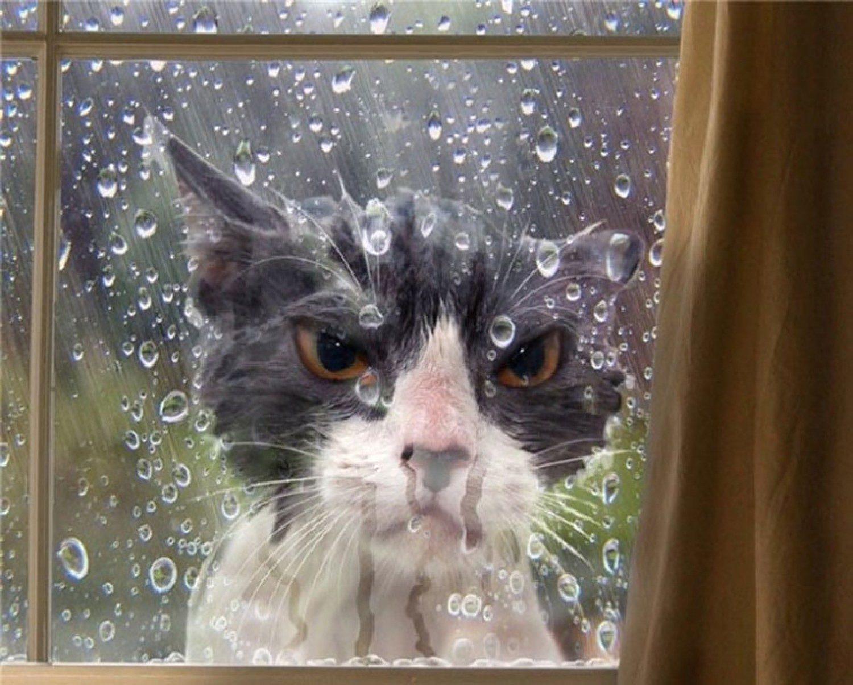 картинка с кошкой на хорошей погоде него можно