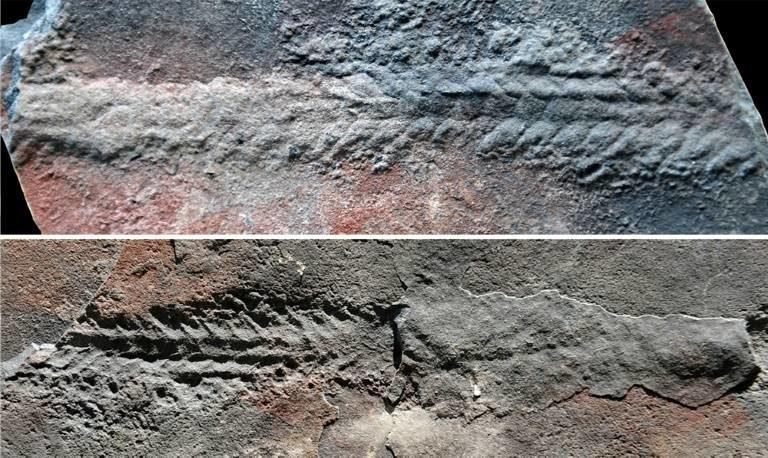 Μέθοδοι γνωριμιών των απολιθωμάτων